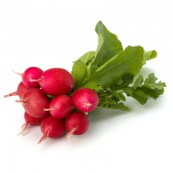 Organic radishes 1 bunch